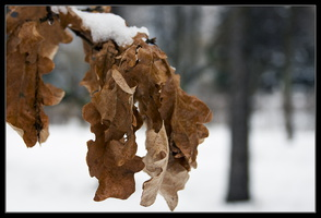old_leaves