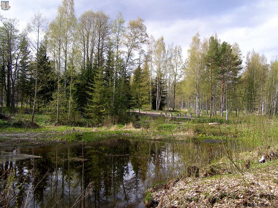 Одно из озер в пойме ручья, 2014 г.