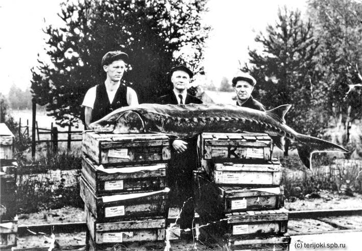 Рыбная ловля в Терийоки