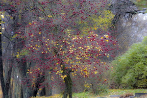 northern_autumn-1
